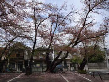 20150409sakura_01.jpg