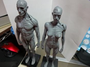 筋肉模型02.JPG