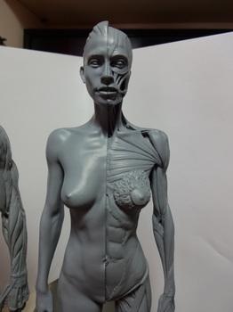 筋肉模型03.JPG
