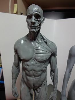 筋肉模型04.JPG