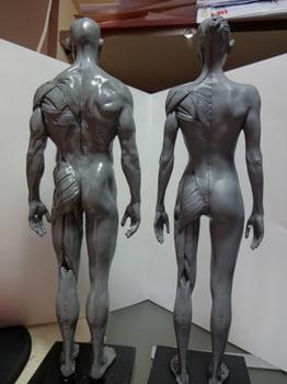 筋肉模型05.JPG