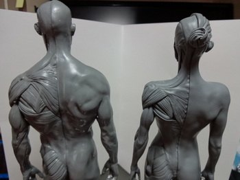 筋肉模型06.JPG