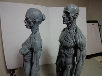 筋肉模型07.JPG