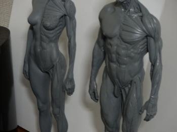 筋肉模型08.JPG